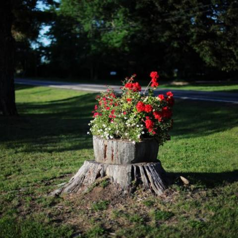 bucket of red flowers on tree stump